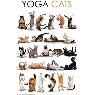 poster de yoga de gatos
